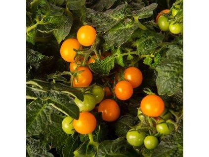 Plantui, Cherry rajčátka 'Venus', 3 kapsle